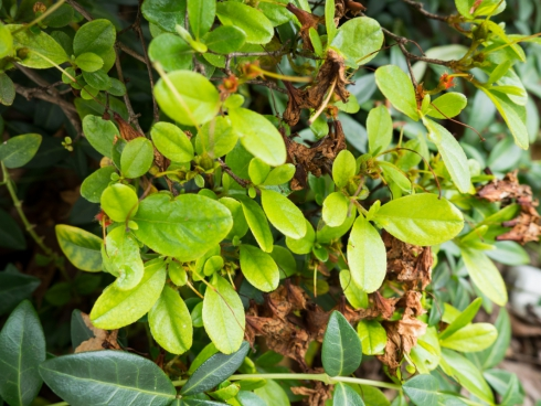 small green leaves on bush