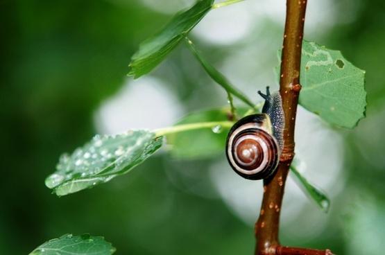 snail animal leaves