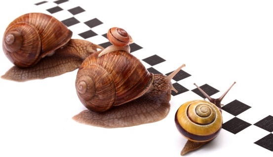 snail game hd picture