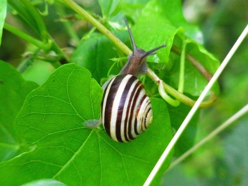 snail invertebrates animal