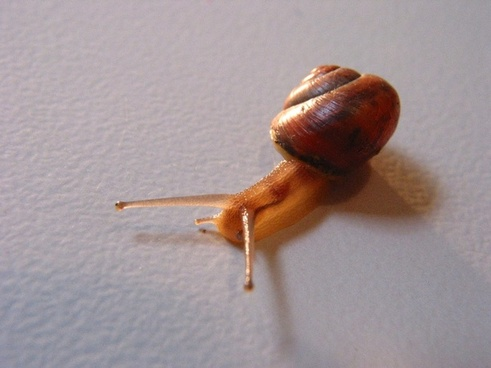snail pets nature