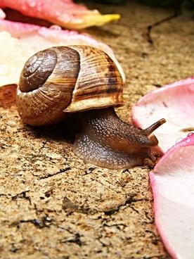 snail pink tickets macro