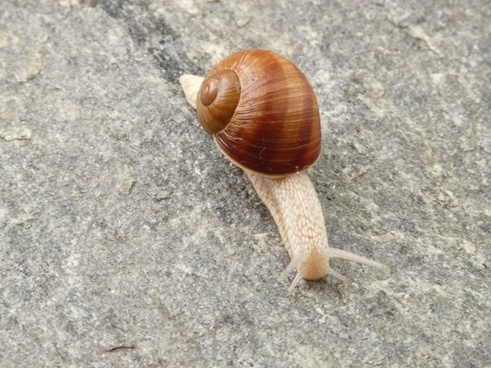 snail shell animal