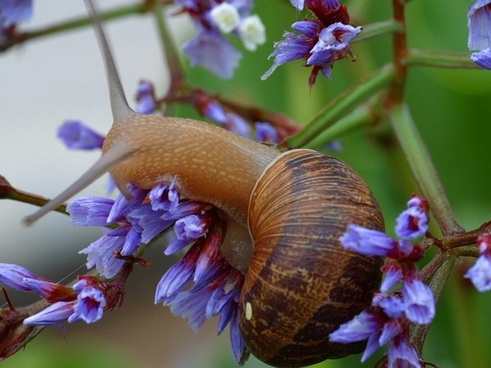 snail shell flower