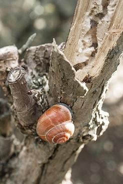 snail snails nature
