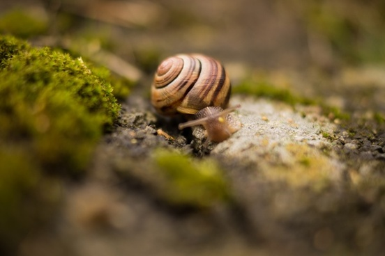 snail with house on the back