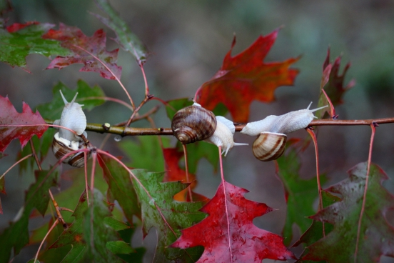 wild snails crawling on natural branch