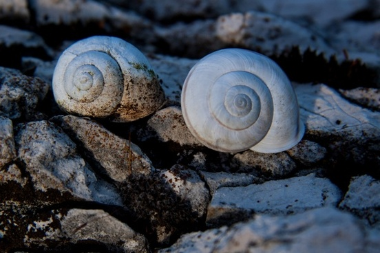 snails snail shells rock
