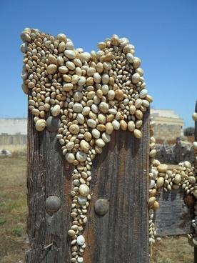 snails snail shells shell