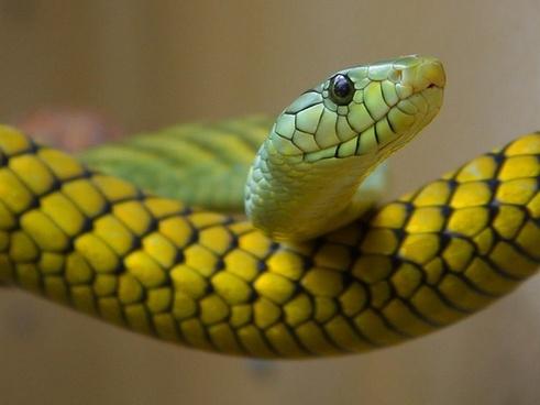 snake green toxic
