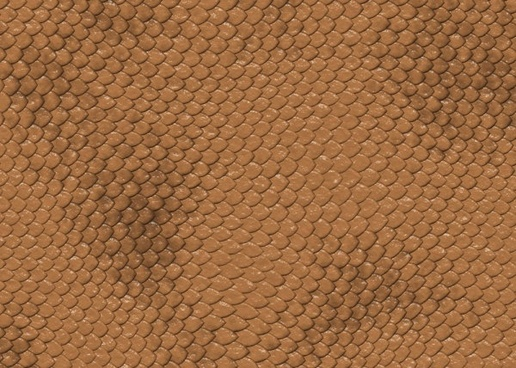 snake skin texture 02 hd pictures