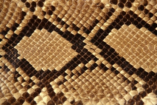 snake skin texture 05 hd picture