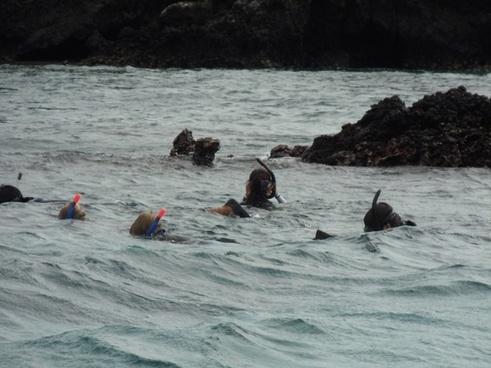 snorkeling heads in ocean