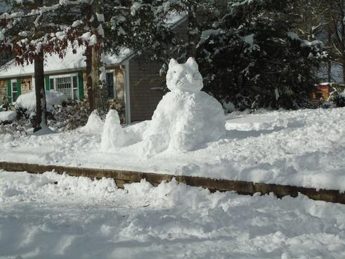 snow cat kitty