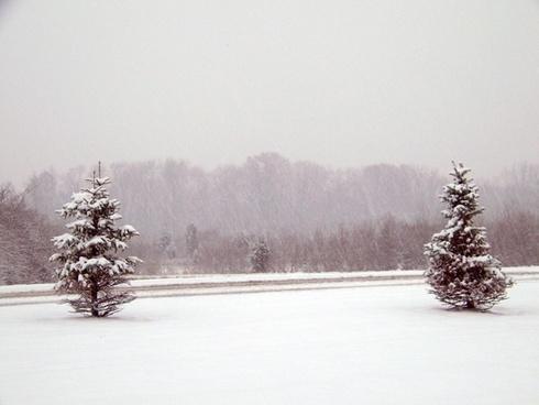 snow evergreen trees