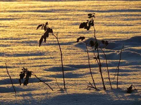 snow landscape snowfield back light
