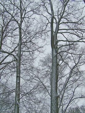 snow on trees 3