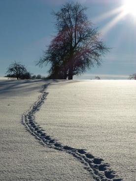 snow traces winter