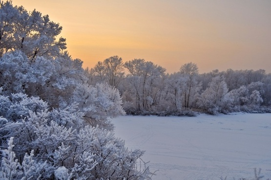 snow trees sunset