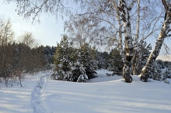 snow woods winter