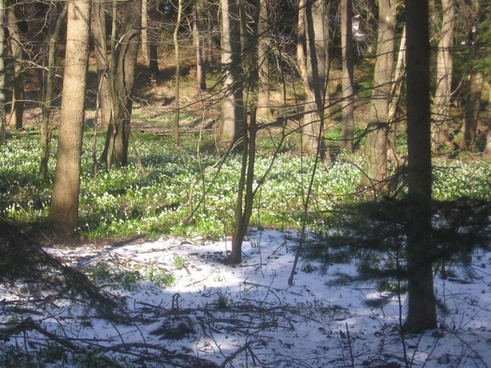 snowflake in the woods