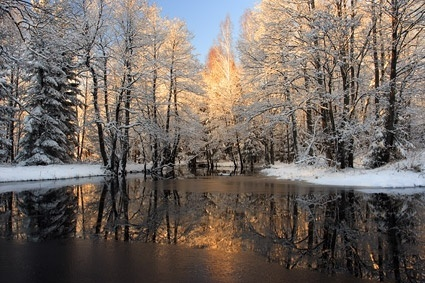 snowmelt in the forest picture
