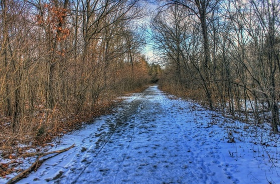 snowy forest path at weldon springs state natural area missouri
