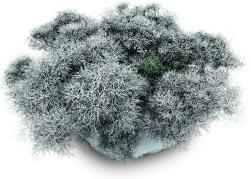 Snowy Stone