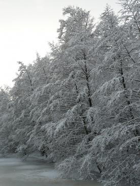 snowy winter wintry