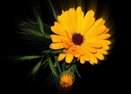 soleil floralexplore