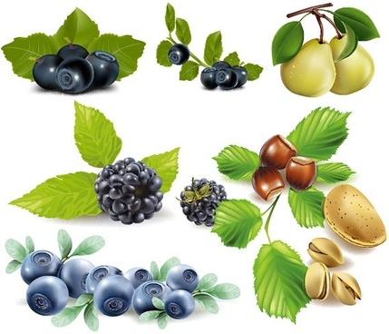 some fruits vector