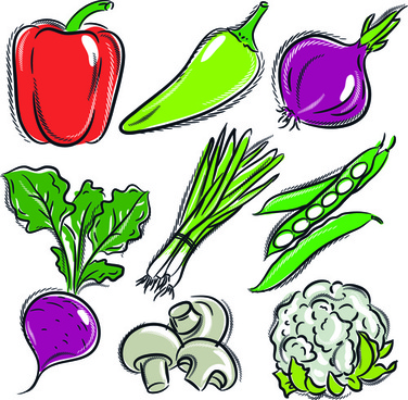 sorts of hand drawing vegetables vector set