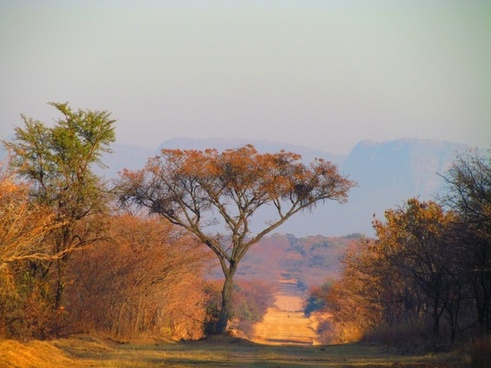 south africa tree nature