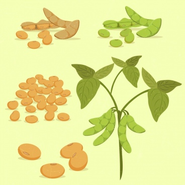 soybean design elements peas trees icons colored design