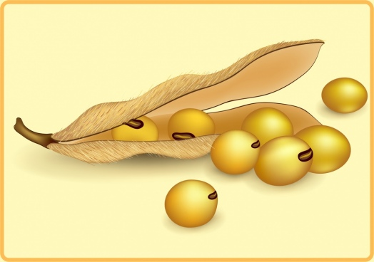 soybean icon shiny 3d decoration
