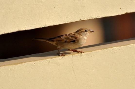 sparrow bird birds