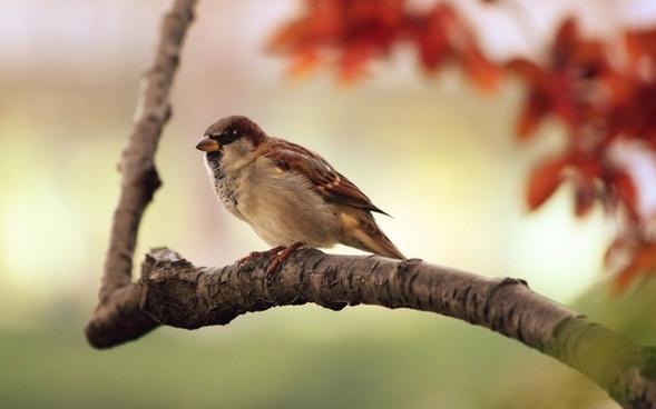 sparrow tree branch