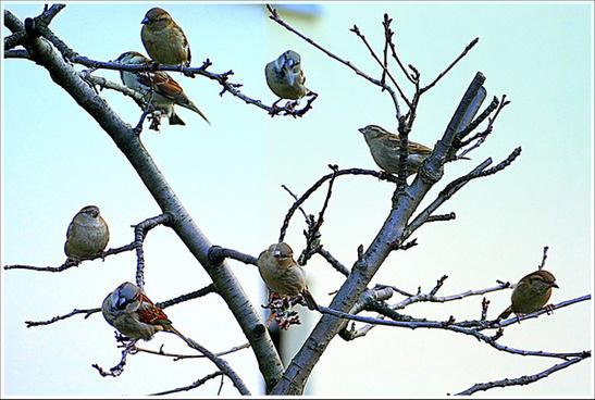 sparrow tree spatzenbaum