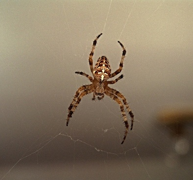 spider a spider's web crusader