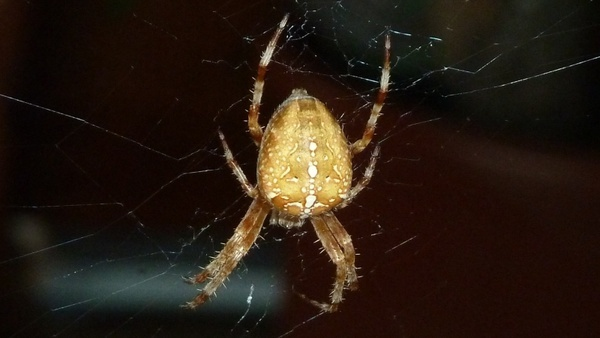 spider animal close