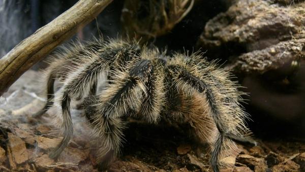 spider aquarium arachnid
