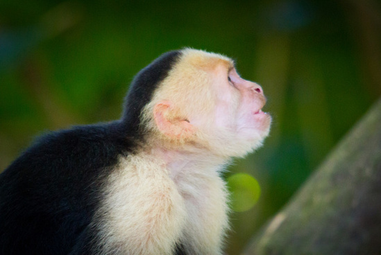 3 monkey free stock photos download (16,744 Free stock