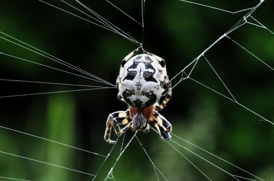 spider network macro