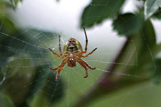 spider spider web web