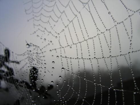 spider web morning