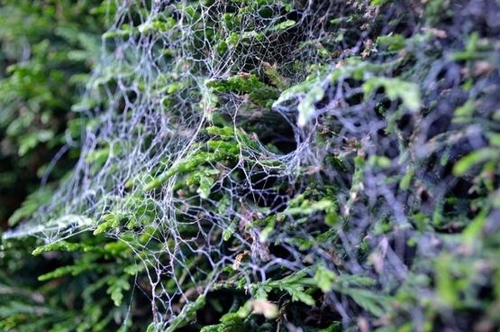 spider web on bushes