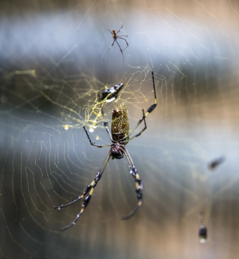 spider working on his web