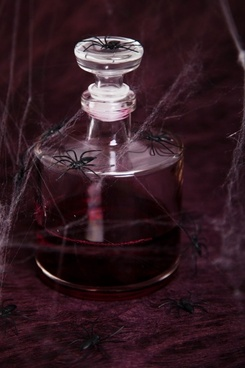 spiders on bottle