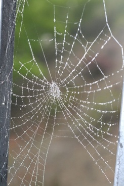 spiderweb covered with dew
