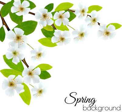 White flower border background free vector download 60960 free spring background with white flowers vector mightylinksfo
